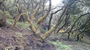 Forêt primaire au centre, toujours dans la brume